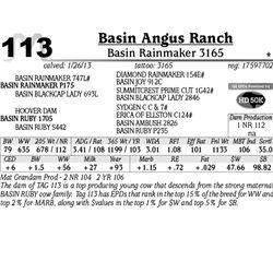 Lot 113 - Basin Rainmaker 3165 - Basin Angus Ranch