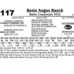 Lot 117 - Basin Consensus 3032 - Basin Angus Ranch