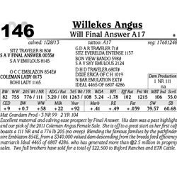 Lot 146 - Will Final Answer A17 - Willekes Angus
