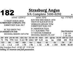 Lot 182 - S/A Complete 3100-0292 - Strasburg Angus
