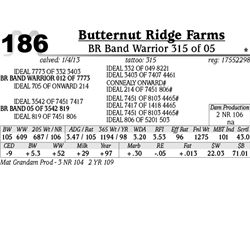 Lot 186 - BR Band Warrior 315 of 05 - Butternut Ridge Farms