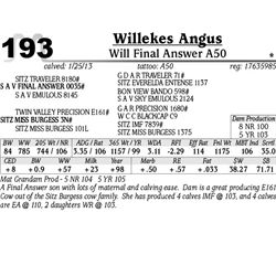 Lot 193 - Will Final Answer A50 - Willekes Angus