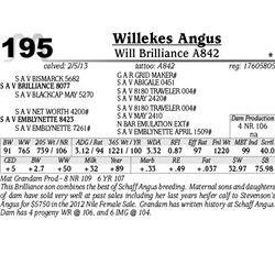Lot 195 - Will Brilliance A842 - Willekes Angus