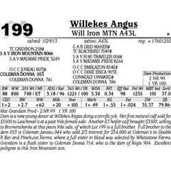 Lot 199 - Will Iron MTN A43L - Willekes Angus