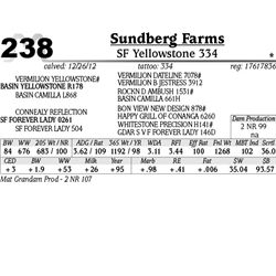 Lot 238 - SF Yellowstone 334 - Sundberg Farms