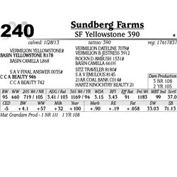 Lot 240 - SF Yellowstone 390 - Sundberg Farms