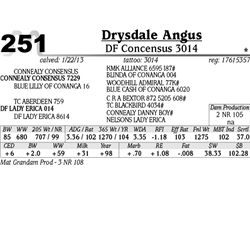 Lot 251 - DF Concensus 3014 - Drysdale Angus