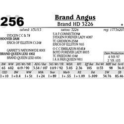 Lot 256 - Brand HD 3226 - Brand Angus