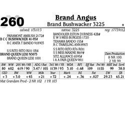 Lot 260 - Brand Bushwacker 3225 - Brand Angus
