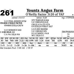 Lot 261 - O'Reilly Factor 3120 of YAF - Younts Angus Farm