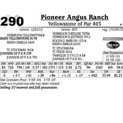 Lot 290 - Yellowstone of Par 403 - Pioneer Angus Ranch