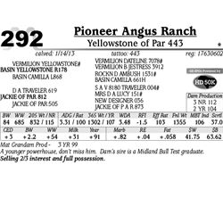 Lot 292 - Yellowstone of Par 443 - Pioneer Angus Ranch