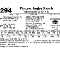 Lot 294 - Yellowstone of Par 442 - Pioneer Angus Ranch