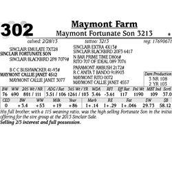 Lot 302 - Maymont Fortunate Son 3213 - Maymont Farm