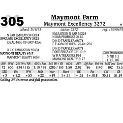 Lot 305 - Maymont Excellency 3272 - Maymont Farm
