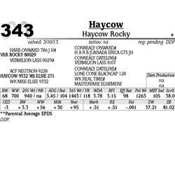 Lot 343 - Haycow Rocky - Haycow