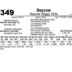 Lot 349 - Haycow Happy 3256 - Haycow
