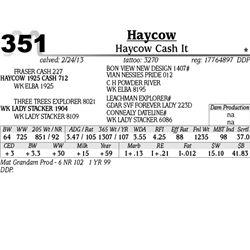 Lot 351 - Haycow Cash It - Haycow