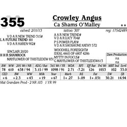 Lot 355 - Ca Shams O'malley - Crowley Angus