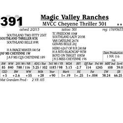 Lot 391 - MVCC Cheyene Thriller 301 - Magic Valley Ranches