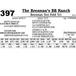 Lot 397 - Brennan Ten Fold 311 - The Brennan's BB Ranch