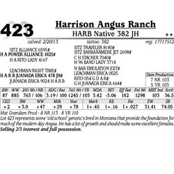 Lot 423 - HARB Native 382 JH - Harrison Angus Ranch