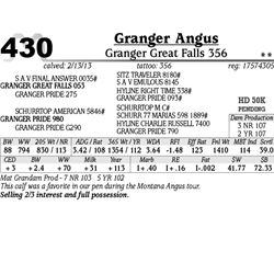 Lot 430 - Granger Great Falls 356 - Granger Angus
