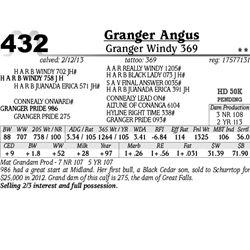 Lot 432 - Granger Windy 369 - Granger Angus