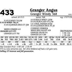 Lot 433 - Granger Windy 368 - Granger Angus