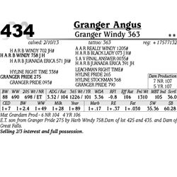 Lot 434 - Granger Windy 363 - Granger Angus