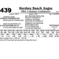 Lot 439 - HRA Constant Confidence - Hershey Ranch Angus