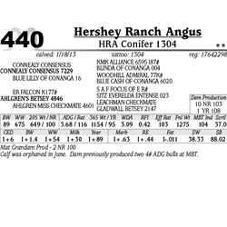 Lot 440 - HRA Conifer 1304 - Hershey Ranch Angus