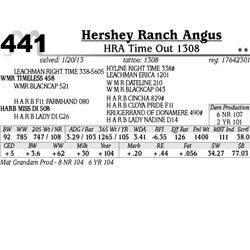 Lot 441 - HRA Time Out 1308 - Hershey Ranch Angus