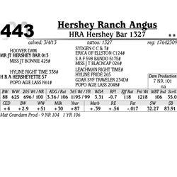 Lot 443 - HRA Hershey Bar 1327 - Hershey Ranch Angus