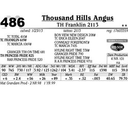 Lot 486 - TH Franklin 2113 - Thousand Hills Angus