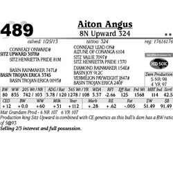 Lot 489 - 8N Upward 324 - Aiton Angus
