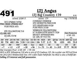 Lot 491 - LTJ Big Country 139 - LTJ Angus