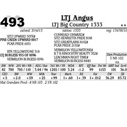 Lot 493 - LTJ Big Country 1333 - LTJ Angus