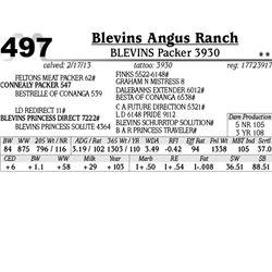 Lot 497 - BLEVINS Packer 3930 - Blevins Angus Ranch