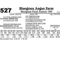 Lot 527 - Bluegrass Final Answer 309 - Bluegrass Angus Farm