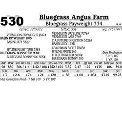 Lot 530 - Bluegrass Payweight 334 - Bluegrass Angus Farm