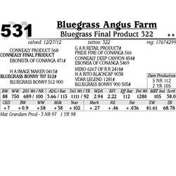 Lot 531 - Bluegrass Final Product 322 - Bluegrass Angus Farm