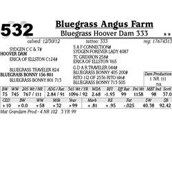 Lot 532 - Bluegrass Hoover Dam 333 - Bluegrass Angus Farm