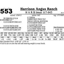Lot 553 - H A R B Imus 117-043 - Harrison Angus Ranch