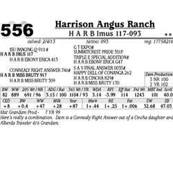 Lot 556 - H A R B Imus 117-093 - Harrison Angus Ranch