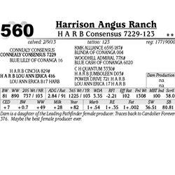 Lot 560 - H A R B Consensus 7229-123 - Harrison Angus Ranch