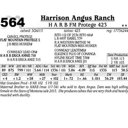 Lot 564 - H A R B FM Protege 423 - Harrison Angus Ranch