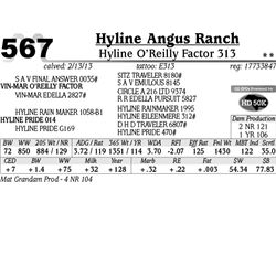 Lot 567 - Hyline O'Reilly Factor 313 - Hyline Angus Ranch