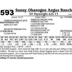 Lot 593 - SO Payweight 625-13 - Sunny Okanogan Angus Ranch