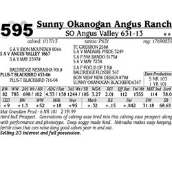 Lot 595 - SO Angus Valley 631-13 - Sunny Okanogan Angus Ranch
